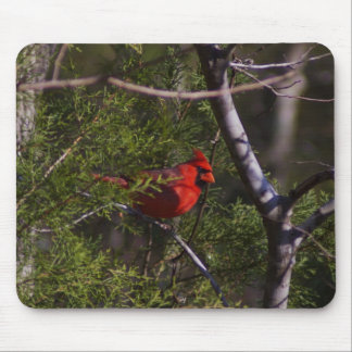 Cardinal in tree mouse pad