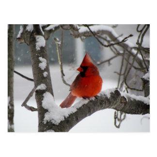 Cardinal in tree postcard