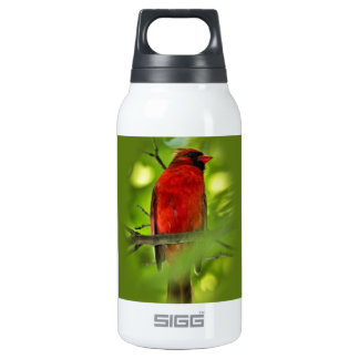 Cardinal Insulated Water Bottle