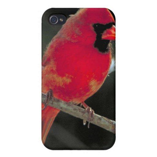Cardinal iPhone 4 Carcasa