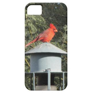 Cardinal iPhone 5 Case