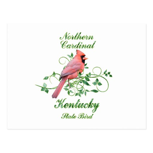 Cardinal Kentucky State Bird Postcards