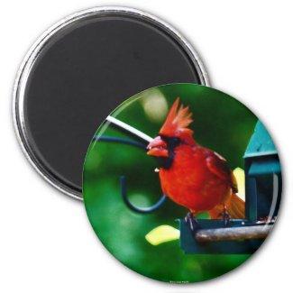 Cardinal Magnet magnet