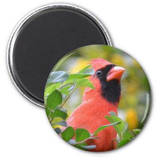 Cardinal Fridge Magnet