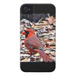 Cardinal (Male) iPhone 4 Case-Mate Case