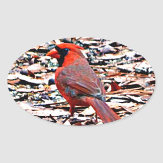 Cardinal (Male) Oval Sticker