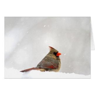 Cardinal Note/Greeting Card