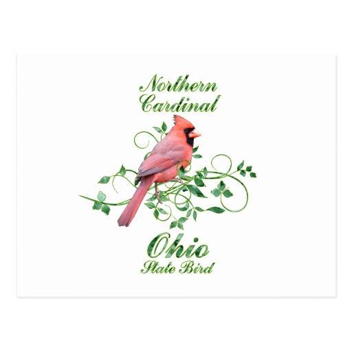 Cardinal Ohio State Bird Post Card