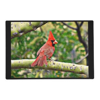 Cardinal on a Limb Kitchen Place Mats