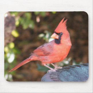 Cardinal on Bird Bath Mousepads