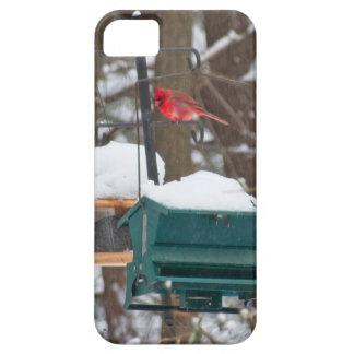 Cardinal on Birdfeeder iPhone SE/5/5s Case
