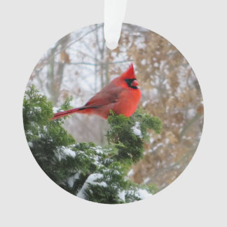 Cardinal on branch with snow ornament