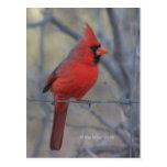 Cardinal on fence - 2009 post card