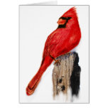 Cardinal on Post Greeting Cards