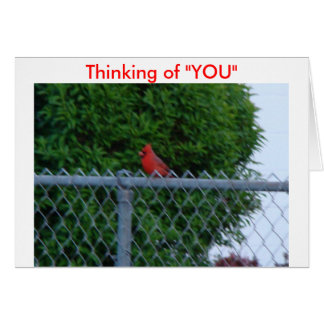 "Cardinal On Wire Fence, Thinking of ""YOU"" Card"