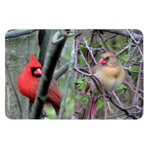 Cardinal Pair Flexble Magnet