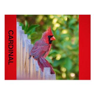 Cardinal Perch Postcard