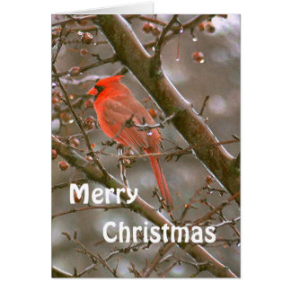 """""""CARDINAL PERCHED IN TREE, MERRY CHRISTMAS"""" CARD"""