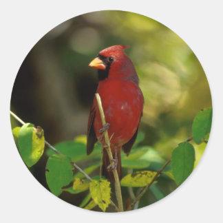 Cardinal Photography Classic Round Sticker