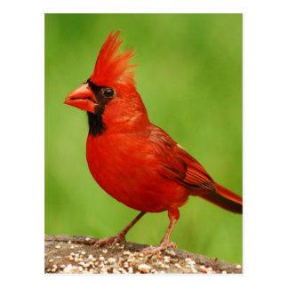 Cardinal Postal
