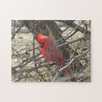 Cardinal Puzzle Con Fotos