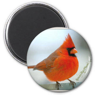 Cardinal Red Bird Refrigerator Magnet