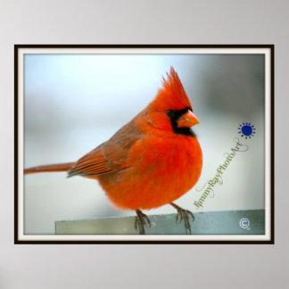 Cardinal Red Bird Poster
