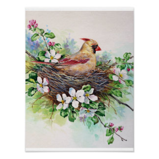 Cardinal Redbird Female Painting Poster