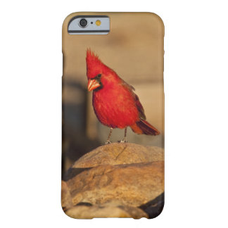 Cardinal, Richmondena cardinalis, South Eastern Barely There iPhone 6 Case