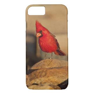 Cardinal, Richmondena cardinalis, South Eastern iPhone 8/7 Case