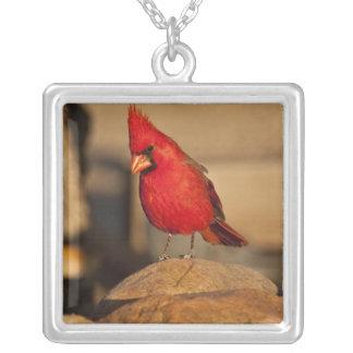 Cardinal, Richmondena cardinalis, South Eastern Silver Plated Necklace