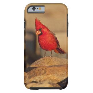 Cardinal, Richmondena cardinalis, South Eastern Tough iPhone 6 Case