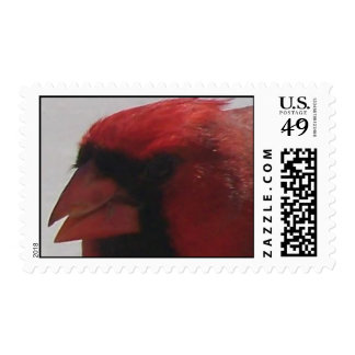 Cardinal Envio