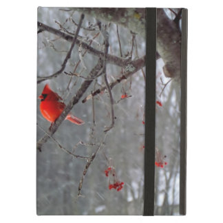 Cardinal sitting in a tree iPad air cover