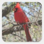 Cardinal Square Sticker