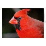 Cardinal Stationery Note Card