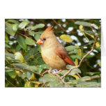 Cardinal Sweetness Greeting Card
