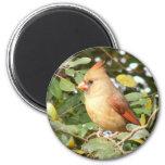 Cardinal Sweetness Magnet