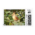 Cardinal Sweetness Stamp
