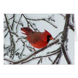 Cardinal Felicitaciones