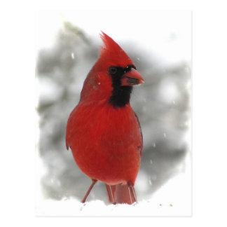 Cardinal Tarjeta Postal