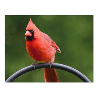 Cardinal Tarjetas Postales