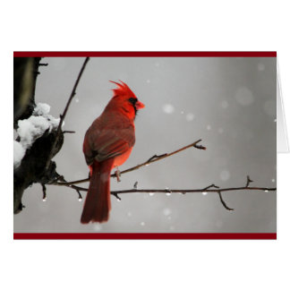 Cardinal Thinking of you card