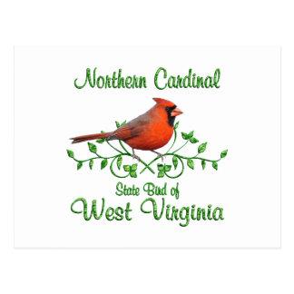 Cardinal West Virginia Bird Postcard