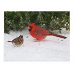 Cardinal with Sparrow Postcard
