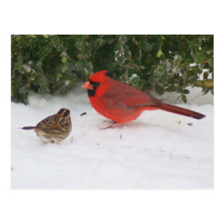 Cardinal with Sparrow Post Card