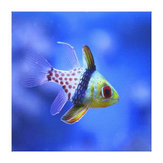 Cardinalfish del pijama - la colección del filón impresion de lienzo