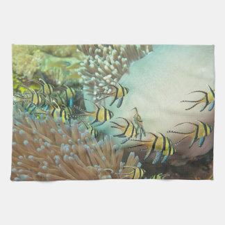 Cardinalfish Kitchen Towel