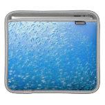 Cardinalfishes swimming underwater iPad sleeves