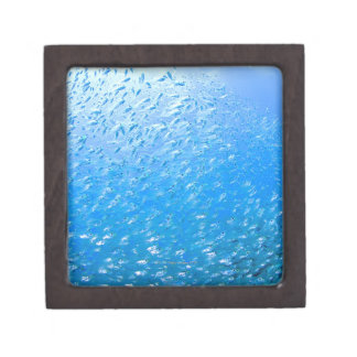 Cardinalfishes swimming underwater jewelry box
